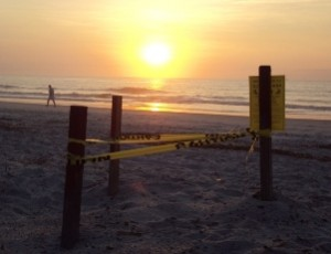 Sunrise Sea Turtle Nest Amelia Island, Florida