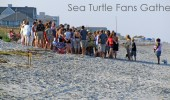 Watch An Amelia Island Sea Turtle Nest Excavation