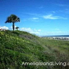 Natural Dunes, Omni Amelia Island Plantation Oceanfront Resort