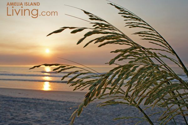 Amelia Island Sea Oats Sunrise