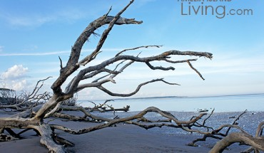 Big Talbot Island's Boneyard Beach
