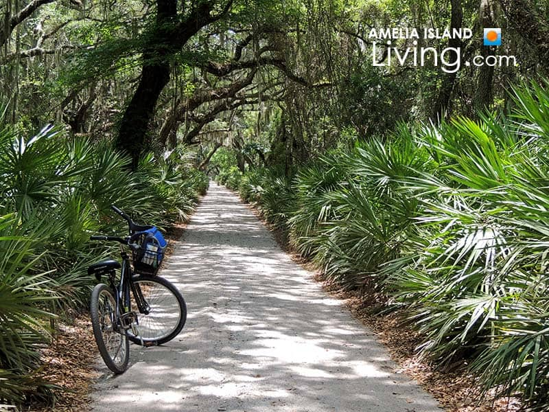 Cumberland Island Georgia bike riding trail through wilderness