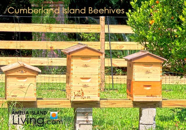 Beehives at Cumberland Island's Greyfield Garden
