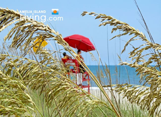 Amelia Island Beach Lifeguards, Summer Season Sea Oats