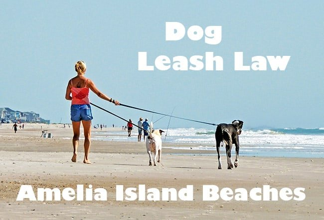 Dogs At Beach Must Be Leashed (City of Fernandina & Nassau County, FL)