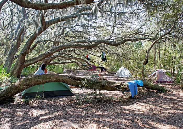 Camping Under Oak Tree Canopy, Cumberland Island