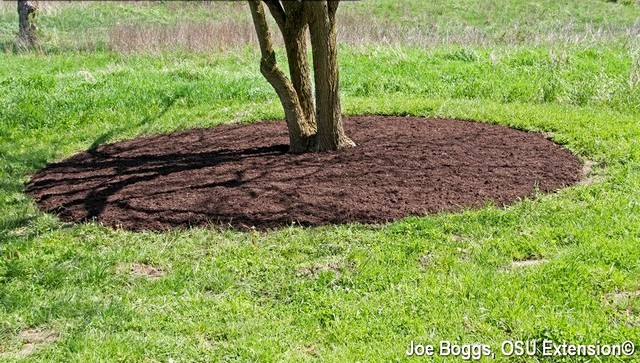 Size Of Mulch Area Depends On Tree's Diameter