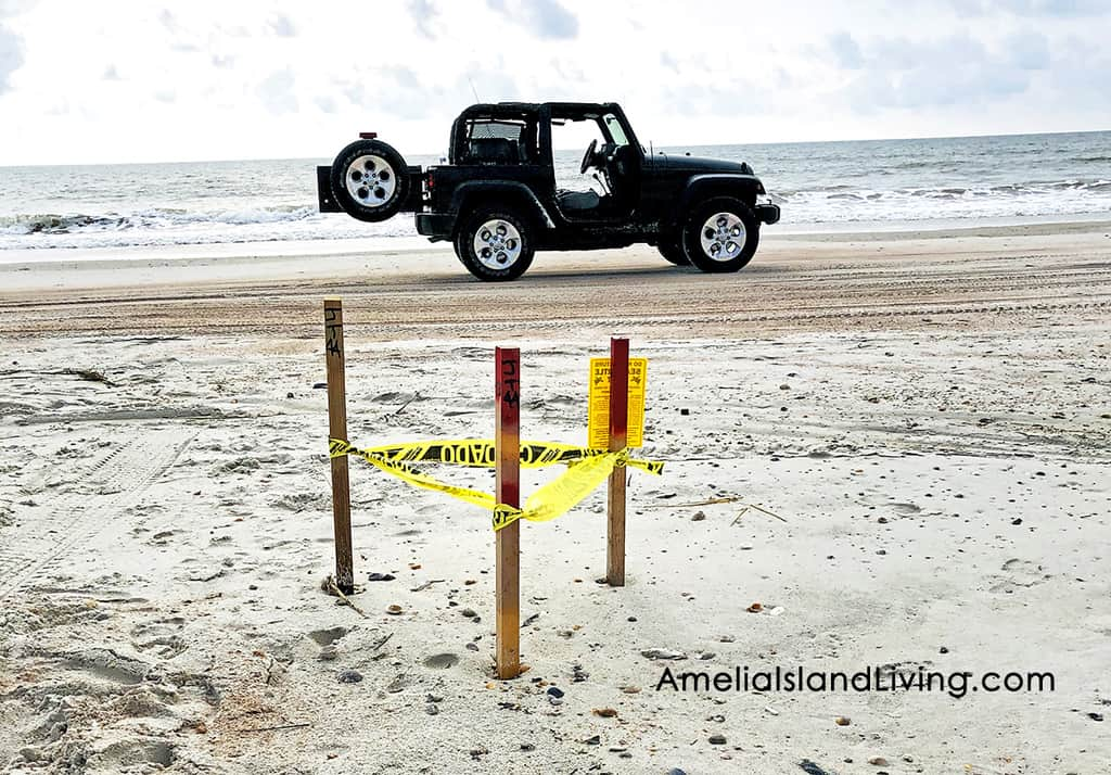 Beach Driving, Amelia Island Sea Turtle Nest 2019